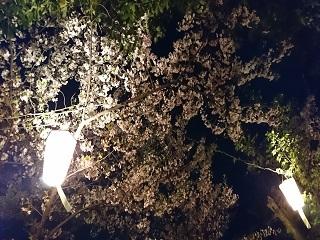 夜桜1.JPG