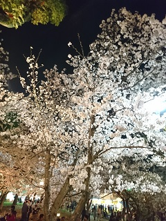 花見亀城公園.JPG
