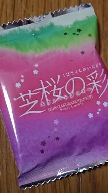 DSC_4909芝桜.JPG